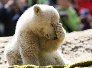 Knut...