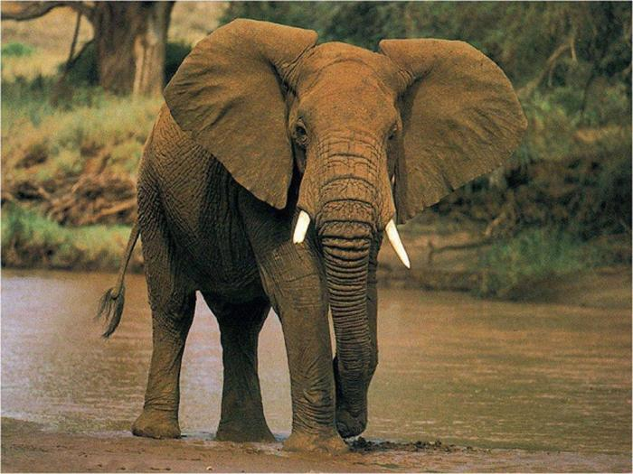 """""""Πώς να αποδείξω πως δεν είμαι ελέφαντας;"""" Σκευωρία..."""